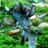 Лисичка серая необычный гриб