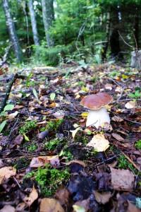 Фото белых грибов